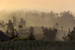 Fog in the morning at sunrise royalty free stock image