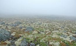 Fog & moss. Fog and moss. Russian north Royalty Free Stock Photos