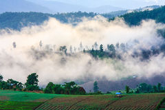 Fog on the mountain. Chiangmai thailand stock photography