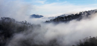 Fog in mountain, Da Lat city Stock Photos