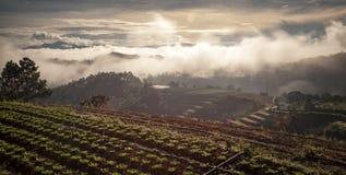 Fog in the mountain at farm in Da Lat city Royalty Free Stock Photo
