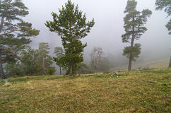 Fog in the mountain forest. Caucasus. Royalty Free Stock Image