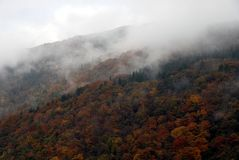Fog mountain forest Stock Image
