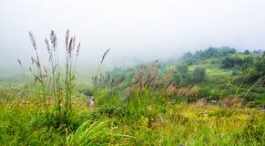 Fog on the mountain meadows. Fog on the high mountain meadows plants Stock Photos