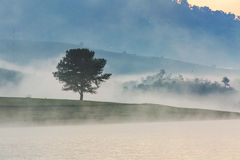 Fog, mountain, pine forest Royalty Free Stock Photo