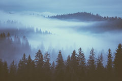 Fog on the mountain slopes Stock Image