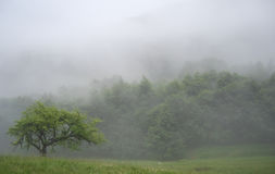Fog in mountains Royalty Free Stock Photo