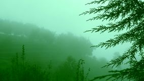 Fog moving through redwood trees on the mountains. Mist moving through redwood trees on the mountains, nature background stock footage