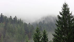 Fog in mystery forest stock footage