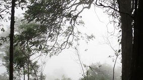 Fog in the mystic forest stock footage