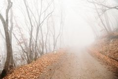 Fog in mystical autumn forest. Outdoors royalty free stock image