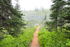Fog in the NorWest forest hike trail Stock Images