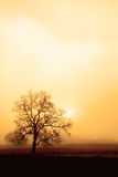 Fog, Oak and Sun in Sepia. An old oak tree forms a sillhoette on a foggy, misty morning.  The rising sun and a sepia tone give this photo a warm, moody feel Stock Image