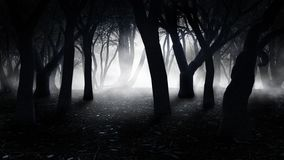 Fog in the old forest Stock Photo