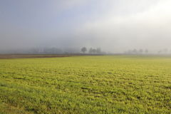 Fog Over Agricultural Land Royalty Free Stock Photos