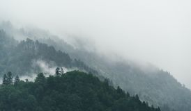 Fog over alpine forest Royalty Free Stock Image