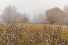 Fog over autumn forest, Vitosha Mountain,  Bulgaria. Fog over autumn forest, Vitosha Mountain, Sofia City Region, Bulgaria Stock Images