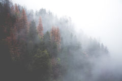 Fog over autumn trees Stock Photography