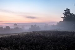 Fog over beautiful flowering heath landscape stock images