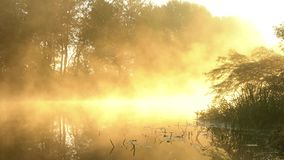 Fog over the calm river at dawn. Foggy dawn over a beautiful summer river stock footage