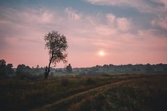 Fog over country road and lonely tree without leaves with the sunset on background stock photo