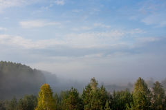 Fog over the forest early in the morning Stock Images