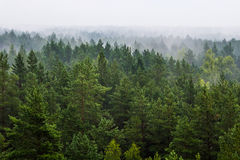 Fog over the forest Stock Photography