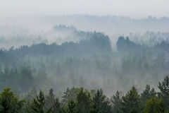 Fog over the forest Royalty Free Stock Photos