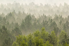 Fog over the forest Stock Image