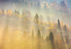 Fog over the forest in morning light. Beautiful nature background. trees with yellow foliage on rolling hills in autumn. amazing atmosphere in Carpathian Royalty Free Stock Photography