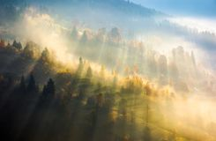 Fog over the forest in morning light. Beautiful nature background. trees with yellow foliage on rolling hills in autumn. amazing atmosphere in Carpathian Stock Photography