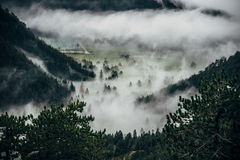 Fog over forest valley Royalty Free Stock Image