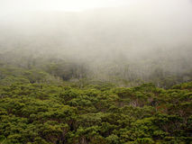 Fog over the forest, Waimea Canyon, Kauai, HI Royalty Free Stock Images