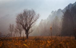 Fog over forest. Fog over wooded mountains and river Muga.  Catalonia, Spain Stock Image
