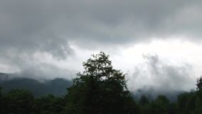 Fog over the Forests. Deep spiritual fog over the altitude forests, passing slowly and reshaping itself. The original wilderness audio is included. Enigmatic stock video footage
