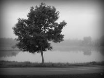 Lonely tree in fog by lake and bike path Stock Images