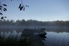 Fog over lake in Finland. Private lake in the early morning near Tahko, Finland Royalty Free Stock Photos