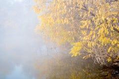 Fog over lake on November morning Stock Images