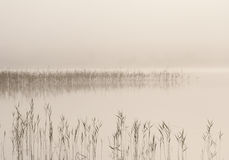 Fog over lake Royalty Free Stock Photo