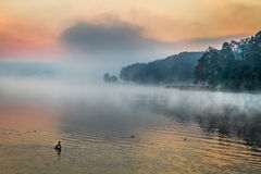 Fog over the lake at sunrise Royalty Free Stock Photos