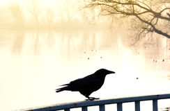 Fog over a lake with swimming ducks and raven. In the foreground. Tranquil scene at sunset or sunrise with warm orange sunlight Stock Photo