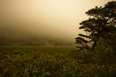 Fog over Marsh Stock Images