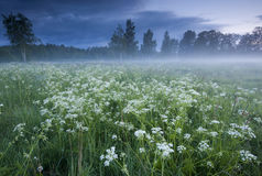 Fog over the meadow Stock Photo