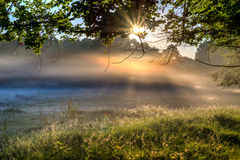 Fog over meadow Royalty Free Stock Images