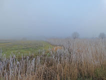 Fog over meadows and reed royalty free stock photos