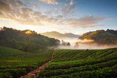 Fog over the mountain at Doi Inthanon national park, Thailand.  Stock Image