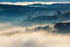 Fog over mountain and forest on sunrise Royalty Free Stock Photo