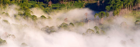 Fog over mountain and forest on sunrise Stock Photography