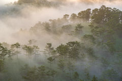 Fog over mountain and forest on sunrise at Da Lat, Vietnam Stock Photography