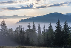 Fog over mountain range in sunrise light. Morning sun rays through the fog over mountain slopes, covered with spruce forest Stock Image